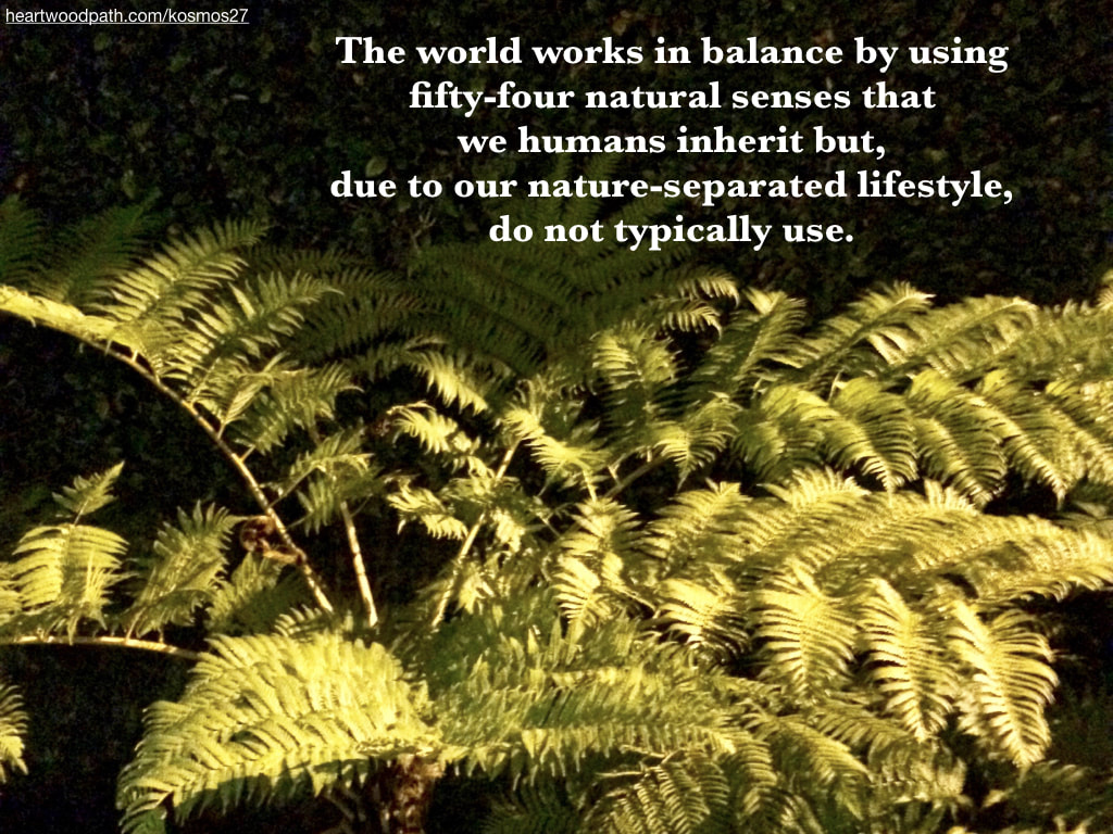 Picture fern leaves quote The world works in balance by using fifty-four natural senses that we humans inherit but, due to our nature-separated lifestyle, do not typically use
