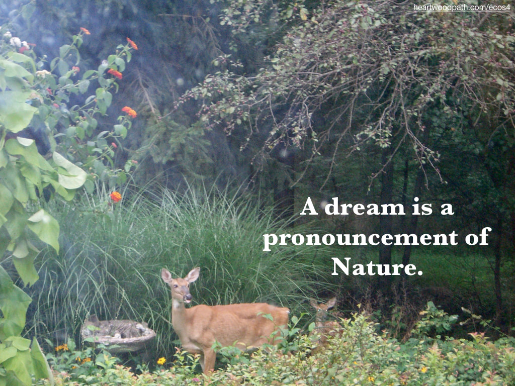 Picture deer quote A dream is a pronouncement of Nature
