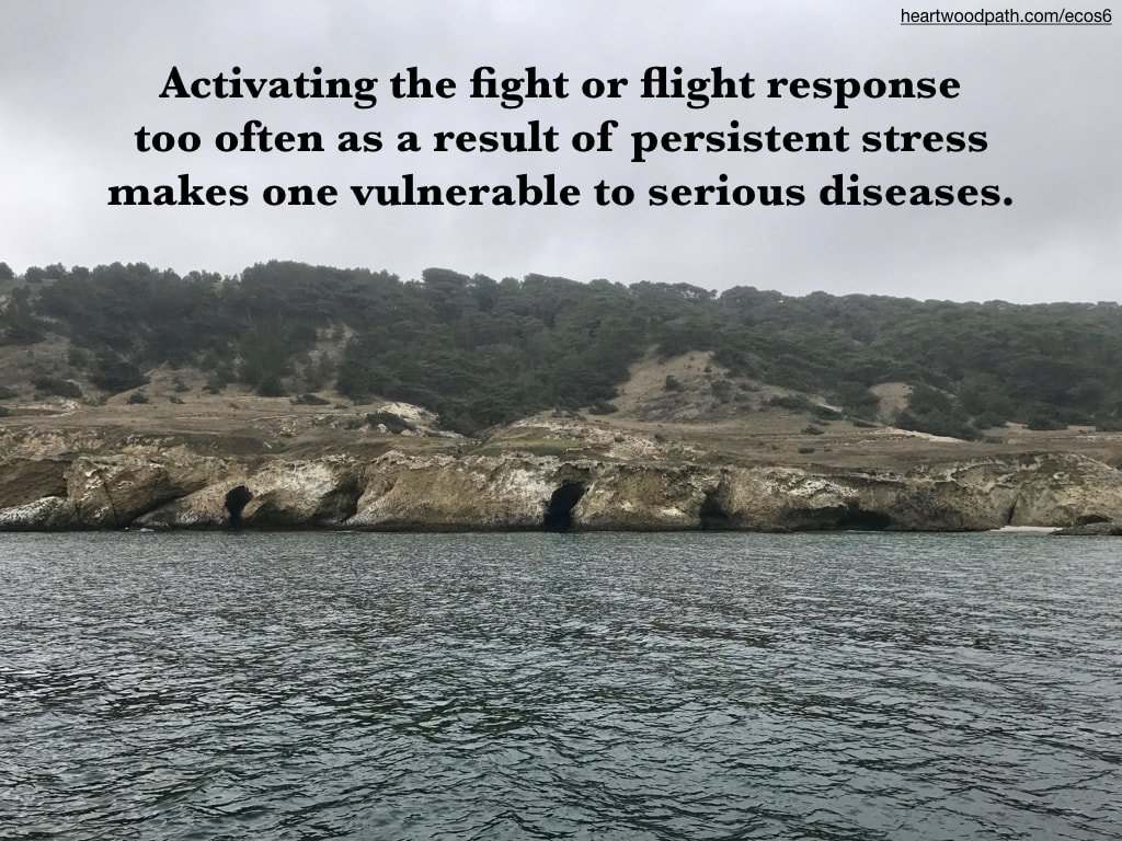 Picture sea caves torrey pines quote Activating the fight or flight response too often as a result of persistent stress makes one vulnerable to serious diseases.