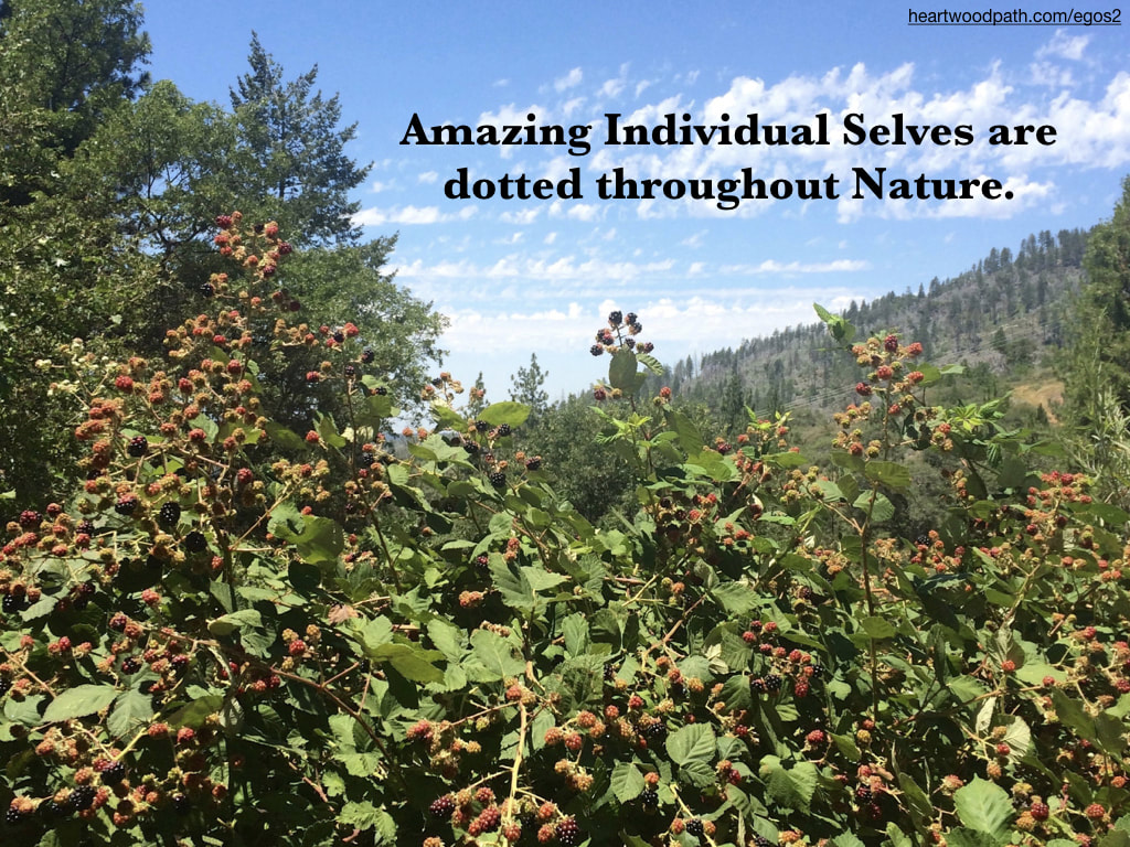 Picture wild blackberries quote Amazing Individual Selves are dotted throughout Nature