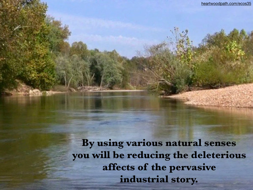 Picture river trees river bank quote By using various natural senses you will be reducing the deleterious affects of the pervasive industrial story