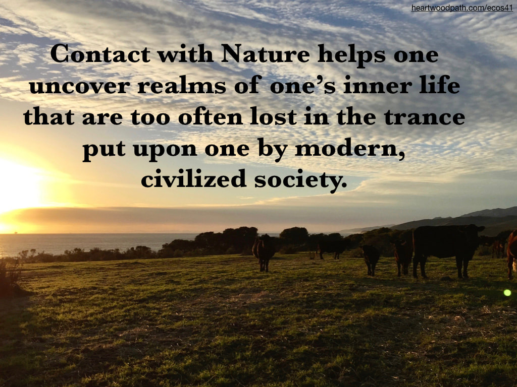Picture cows sunset grass field quote Contact with Nature helps one uncover realms of one's inner life that are too often lost in the trance put upon one by modern, civilized society