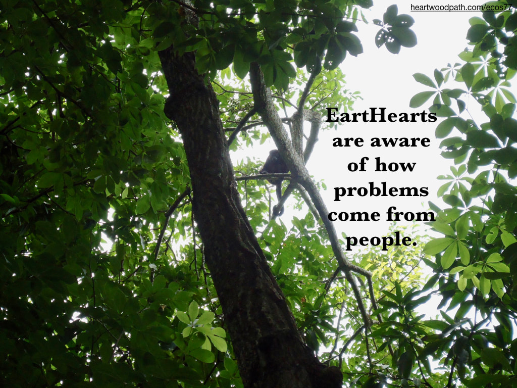 Picture money tree quote EartHearts are aware of how problems come from people