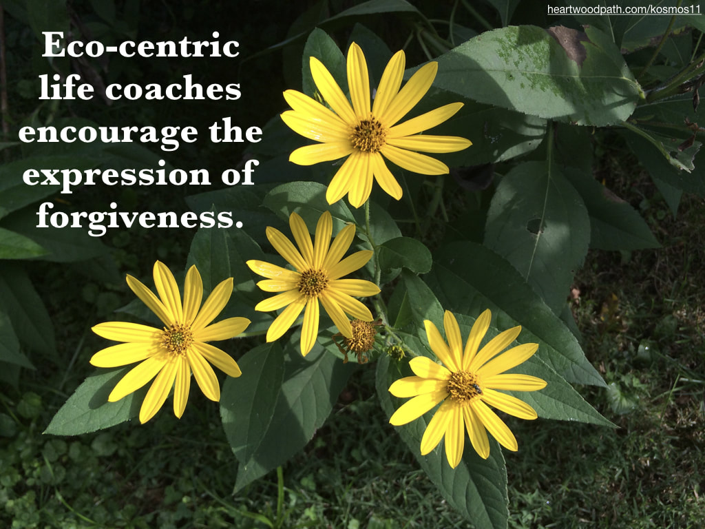 picture of flowers and quote Eco-centric life coaches encourage the expression of forgiveness