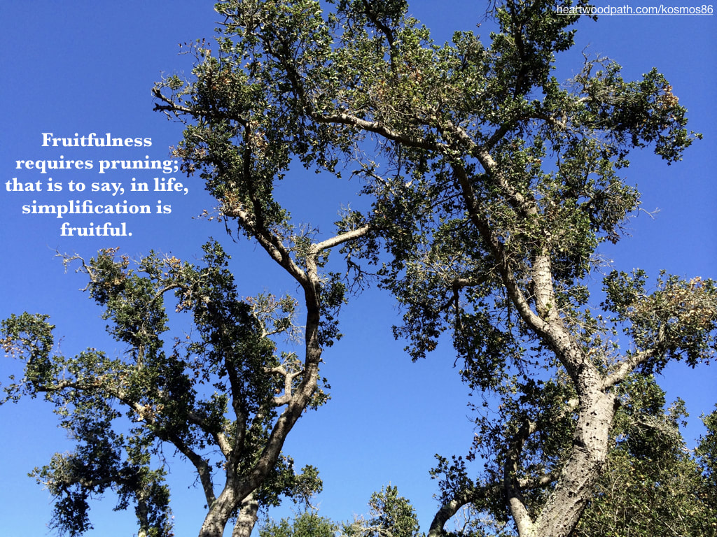 Picture trees and blue sky with quote Fruitfulness requires pruning; that is to say, in life, simplification is fruitful