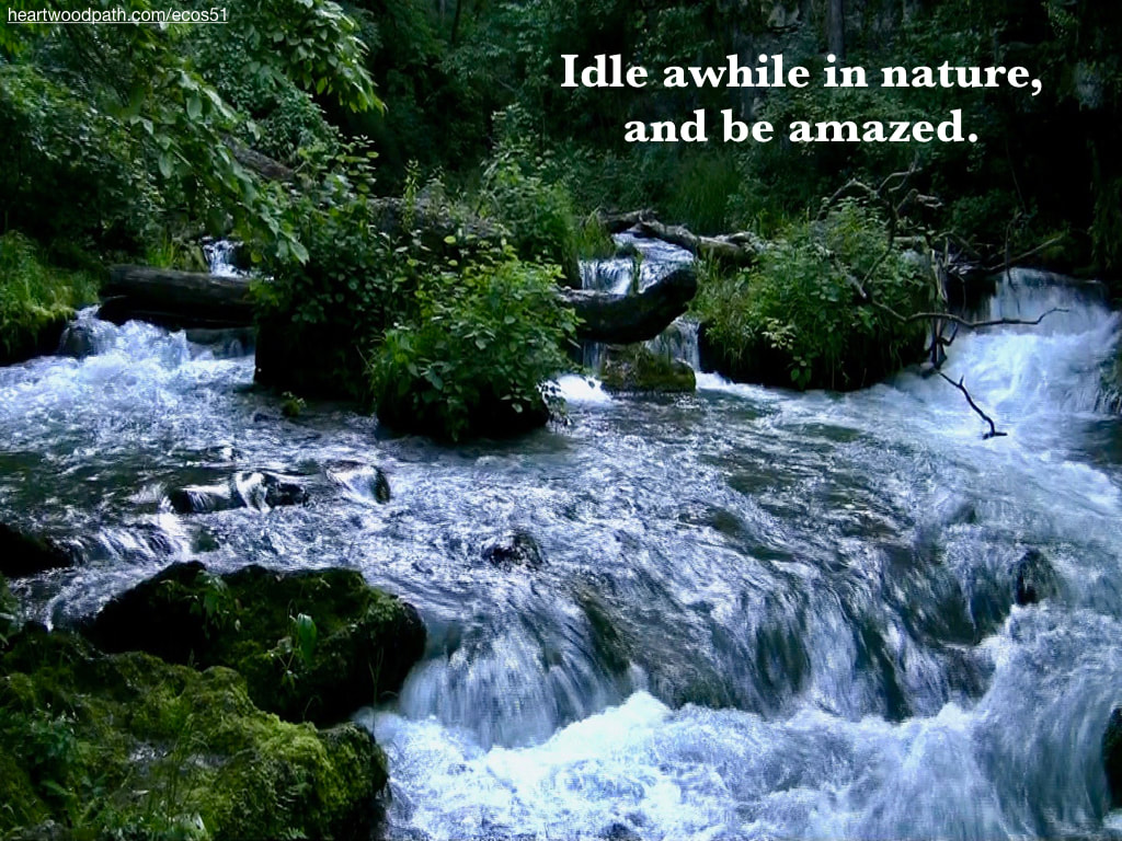 Picture green forest river rapids quote Idle awhile in nature, and be amazed
