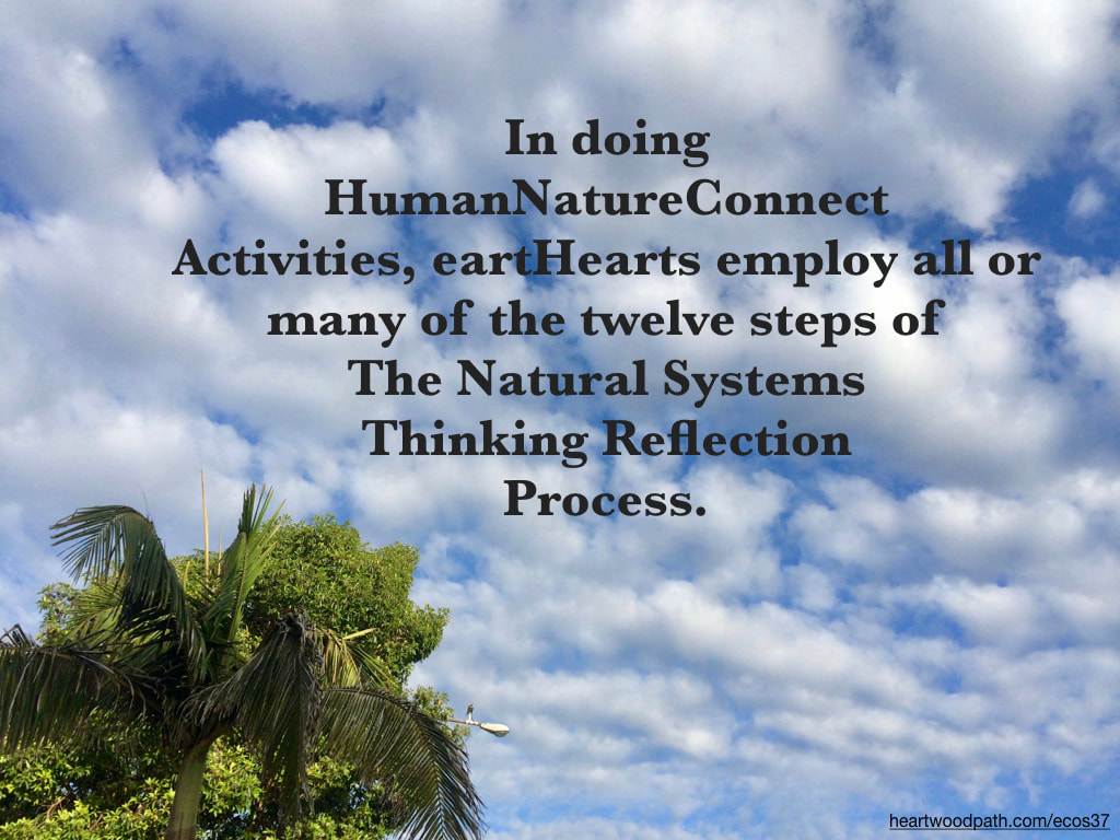 Picture palm trees clouds quote In doing HumanNatureConnect Activities, eartHearts employ all or many of the twelve steps of The Natural Systems Thinking Reflection Process.