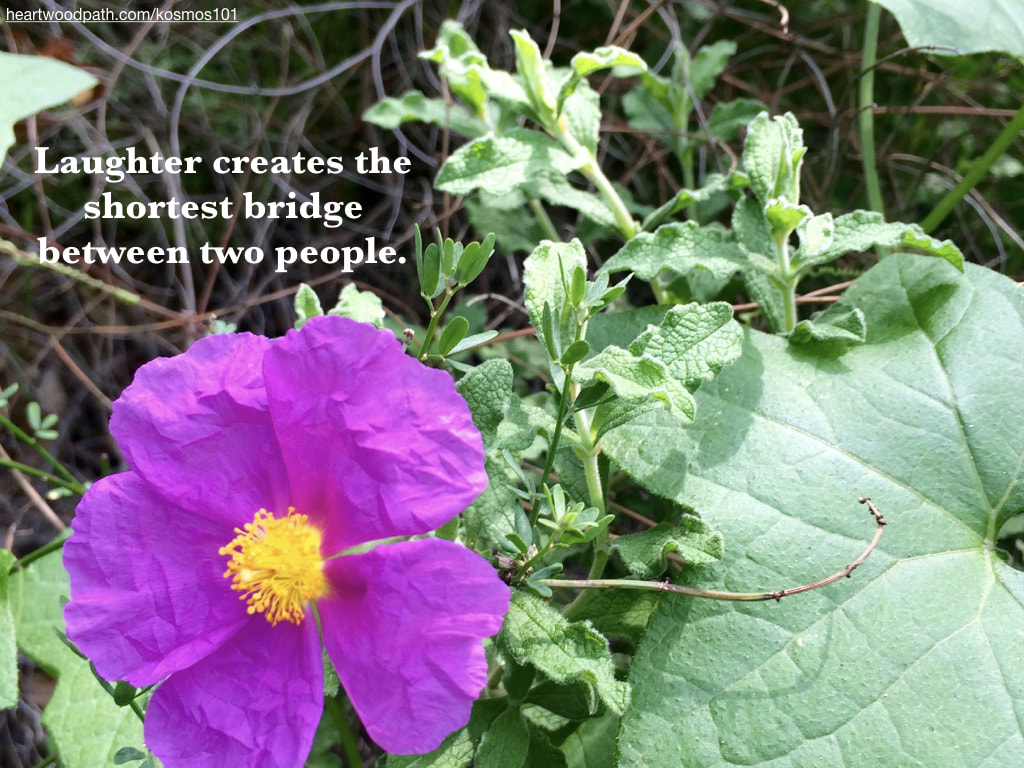Picture purple flower with quote Laughter creates the shortest bridge between two people