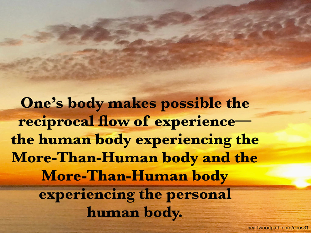 Picture bright yellow orange sunset ocean quote One's body makes possible the reciprocal flow of experience--the human body experiencing the More-Than-Human body and the More-Than-Human body experiencing the personal human body