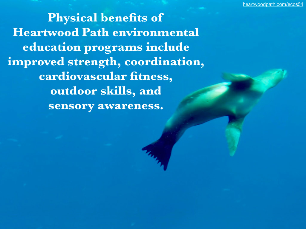 Picture sea lion underwater blue water quote Physical benefits of Heartwood Path environmental education programs include improved strength, coordination, cardiovascular fitness, outdoor skills, and sensory awareness