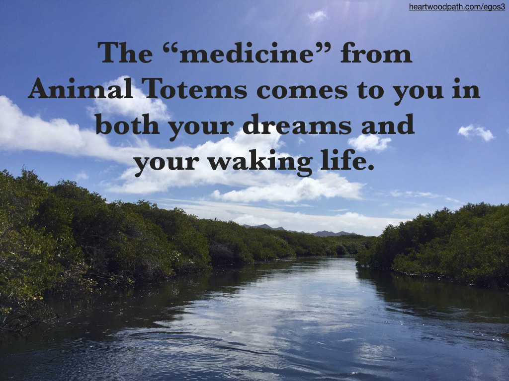 "Picture mangrove with quote The ""medicine"" from Animal Totems comes to you in both your dreams and your waking life"