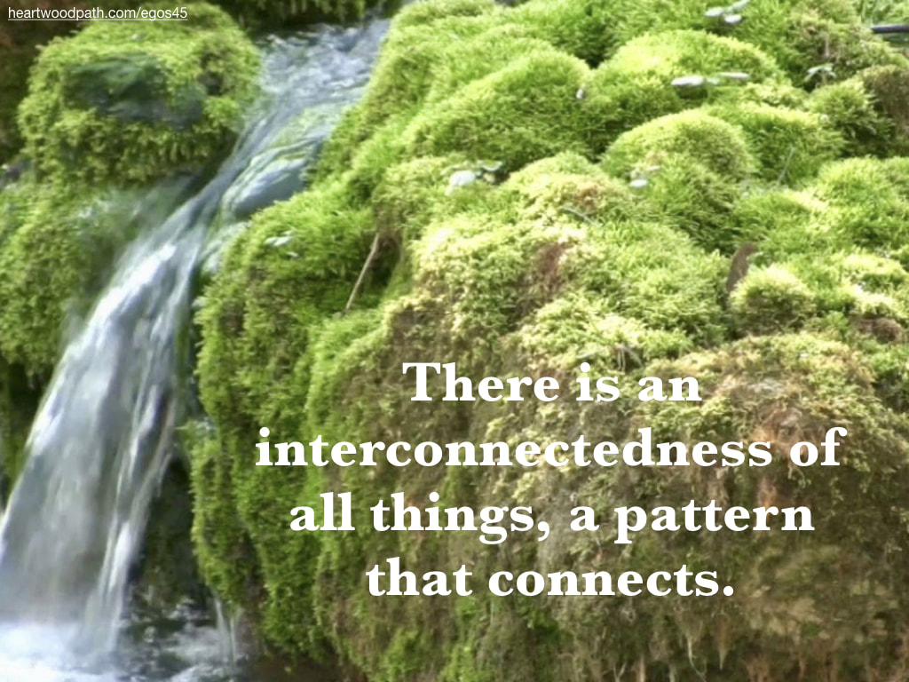 Picture mossy rapids river words There is an interconnectedness of all things, a pattern that connects