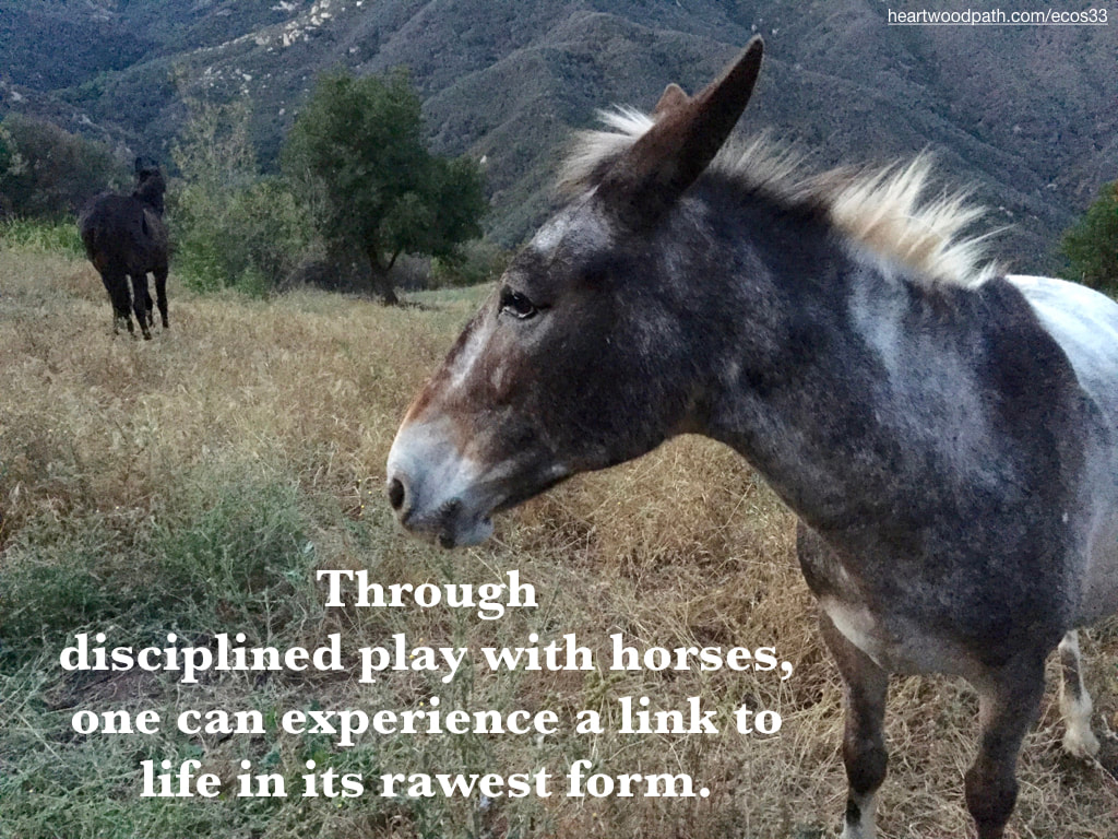 Picture donkey mountain quote Through disciplined play with horses, one can experience a link to life in its rawest form