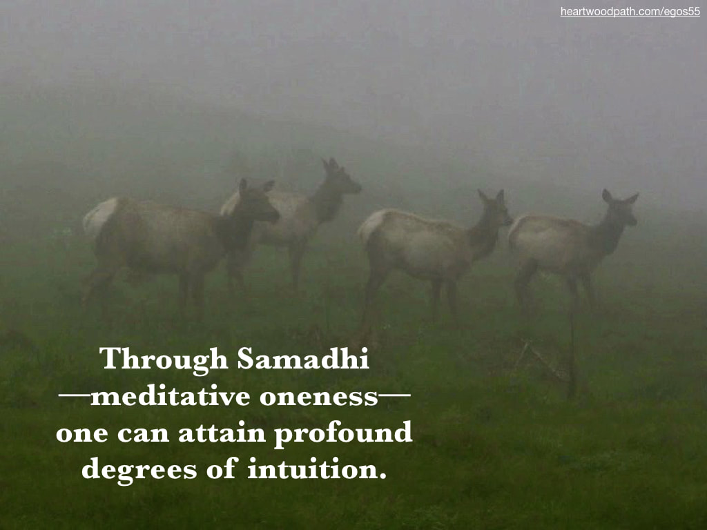 Picture deer quote Through Samadhi––meditative oneness––one can attain profound degrees of intuition