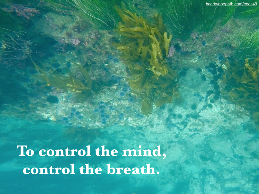 Picture underwater eel grass urchin quote To control the mind, control the breath