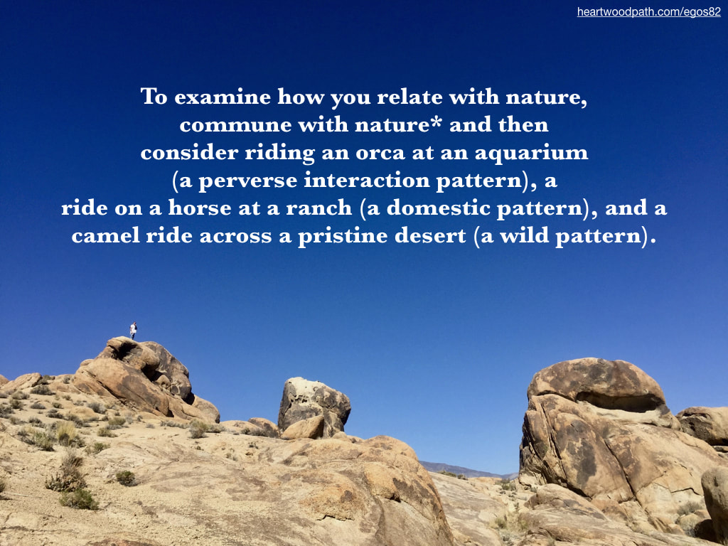 Picture connecting with nature personal growth activity To examine how you relate with nature, commune with nature* and then consider  riding an orca at an aquarium (a perverse interaction pattern), a ride on a horse at a ranch (a domestic pattern), and a camel ride across a pristine desert (a wild pattern).