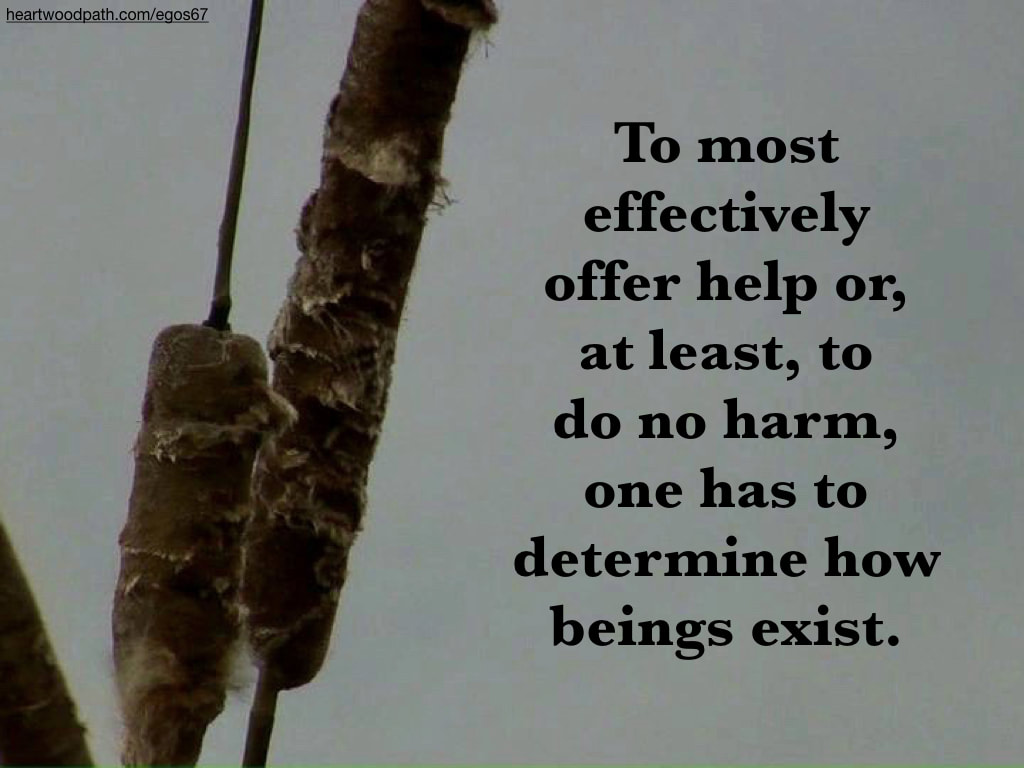 Picture cattails quote To most effectively offer help or, at least, to do no harm, one has to determine how beings exist