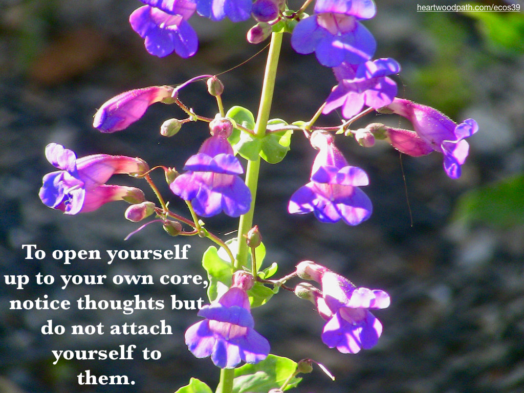 Picture purple flowers quote To open yourself up to your own core, notice thoughts but do not attach yourself to them