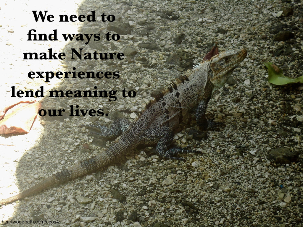 Picture iguana quote We need to find ways to make Nature experiences lend meaning to our lives