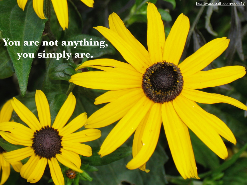 Picture yellow flower quote You are not anything, you simply are